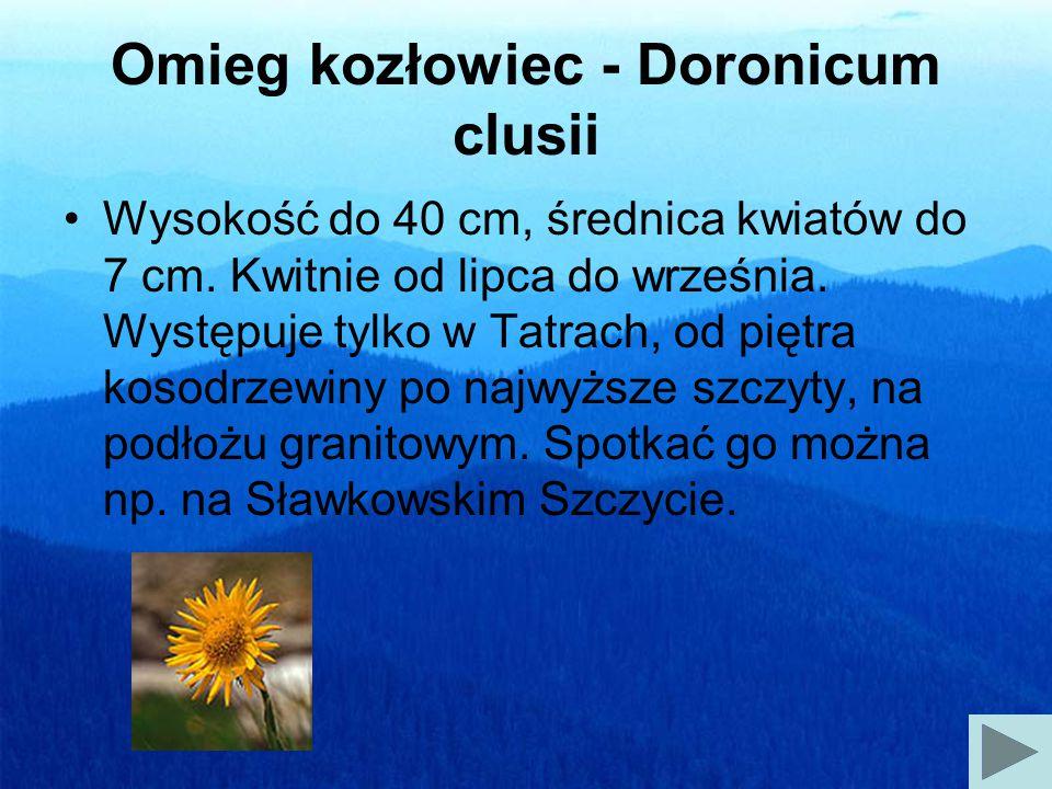 Omieg kozłowiec - Doronicum clusii