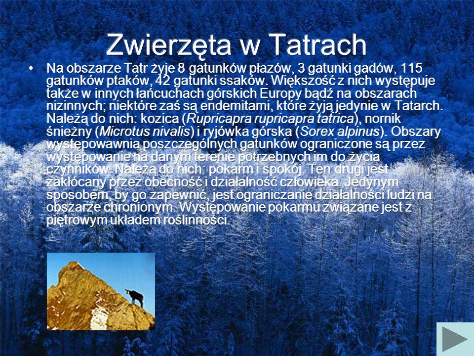 Zwierzęta w Tatrach
