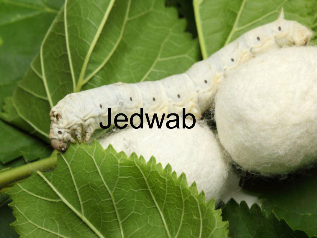 Jedwab