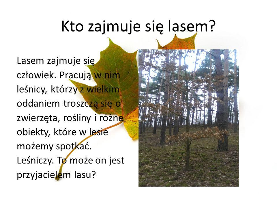 Kto zajmuje się lasem