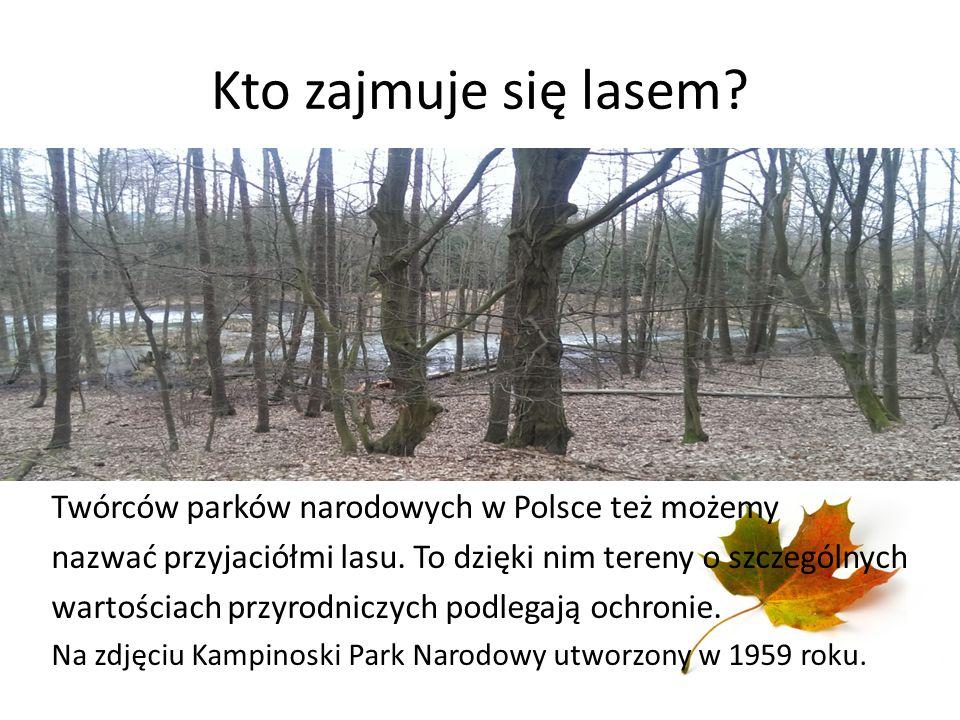 Kto zajmuje się lasem Twórców parków narodowych w Polsce też możemy