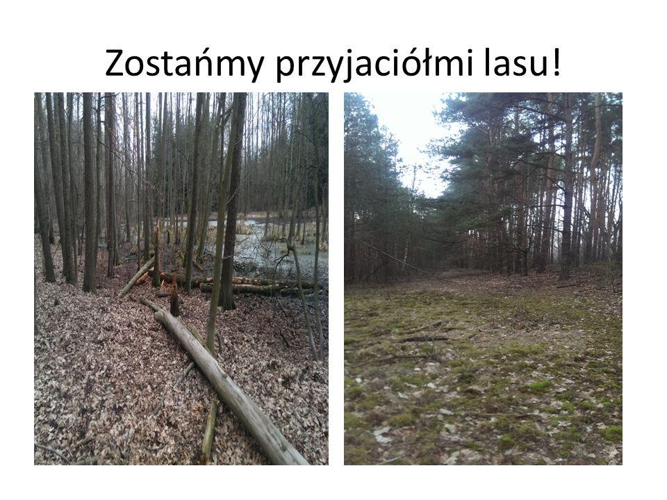 Zostańmy przyjaciółmi lasu!
