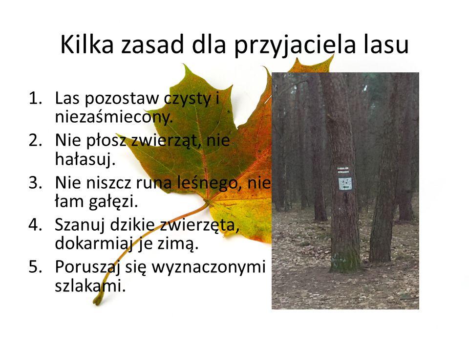 Kilka zasad dla przyjaciela lasu