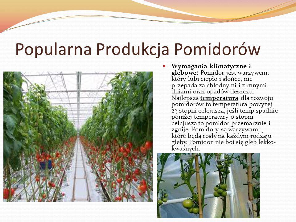 Popularna Produkcja Pomidorów