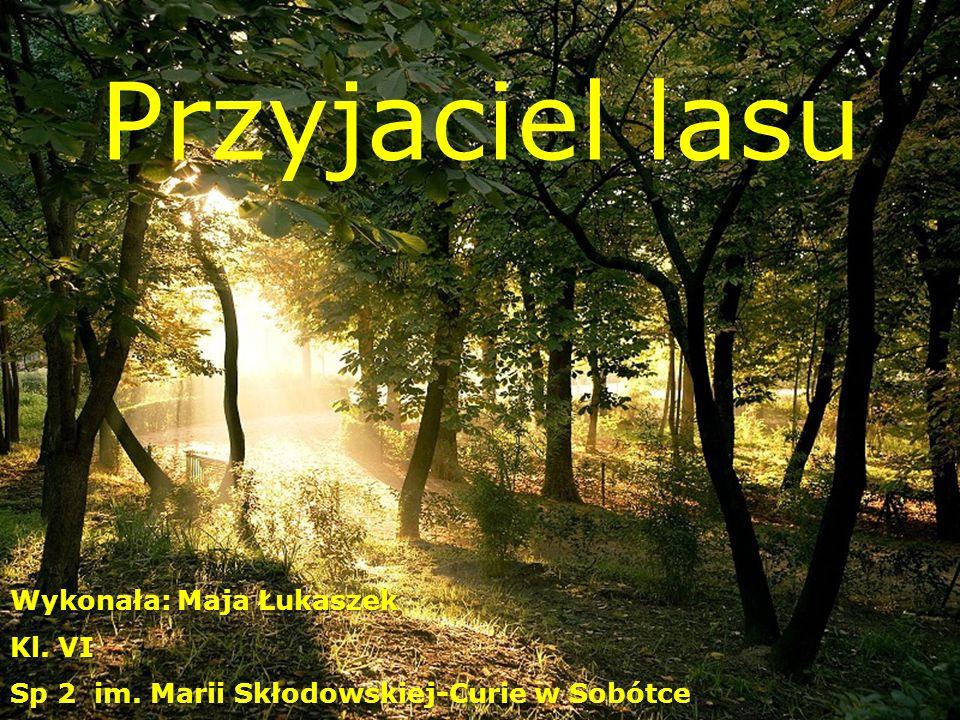 Przyjaciel lasu Wykonała: Maja Łukaszek Kl. VI