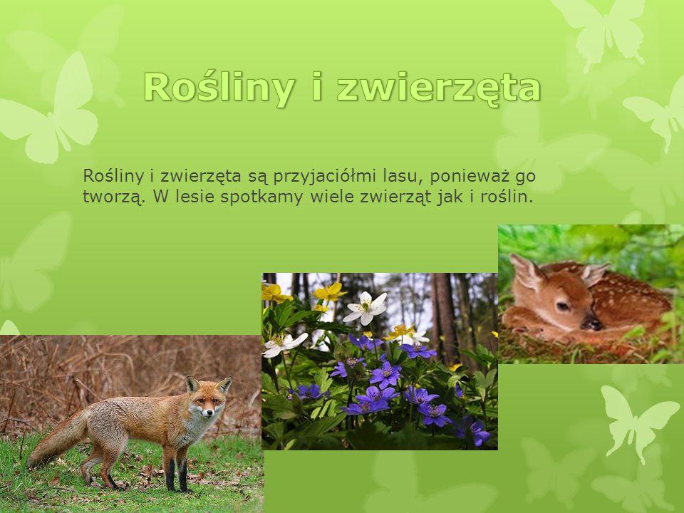 Rośliny i zwierzęta Rośliny i zwierzęta są przyjaciółmi lasu, ponieważ go tworzą.