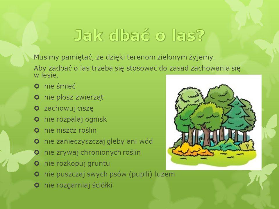 Jak dbać o las Musimy pamiętać, że dzięki terenom zielonym żyjemy.