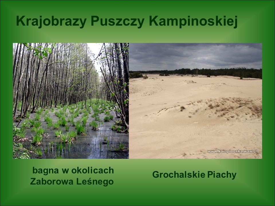 bagna w okolicach Zaborowa Leśnego