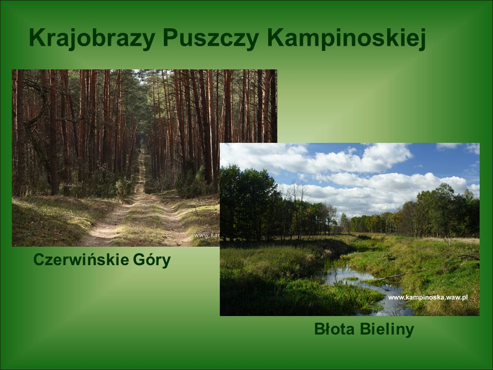 Krajobrazy Puszczy Kampinoskiej