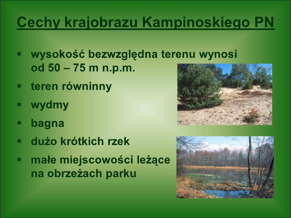 Cechy krajobrazu Kampinoskiego PN