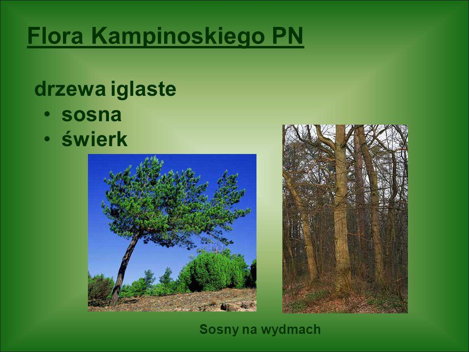 Flora Kampinoskiego PN