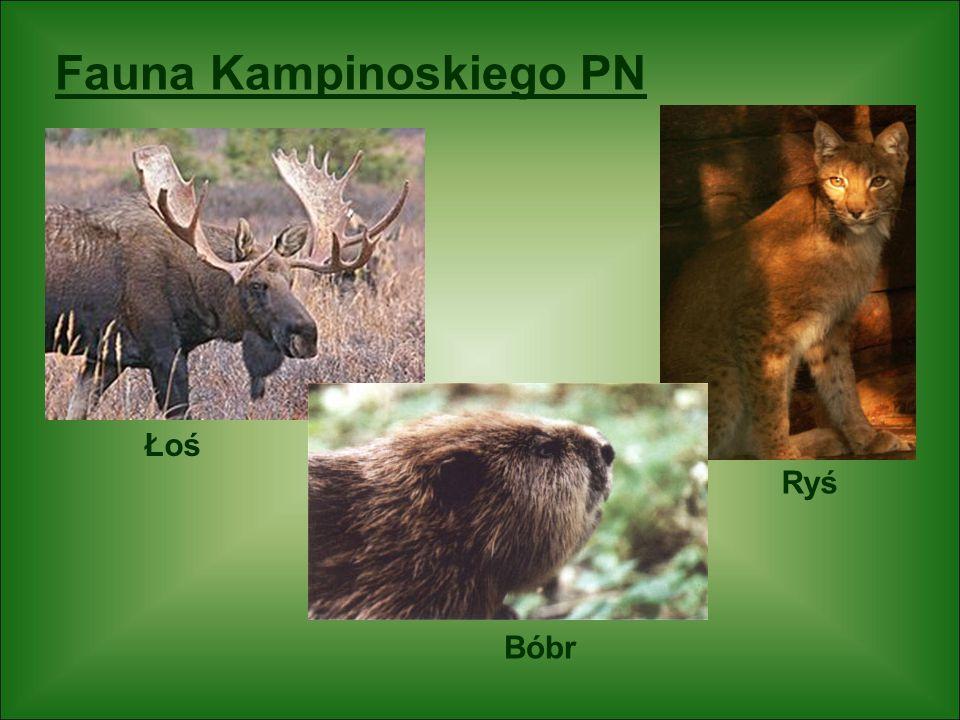 Fauna Kampinoskiego PN