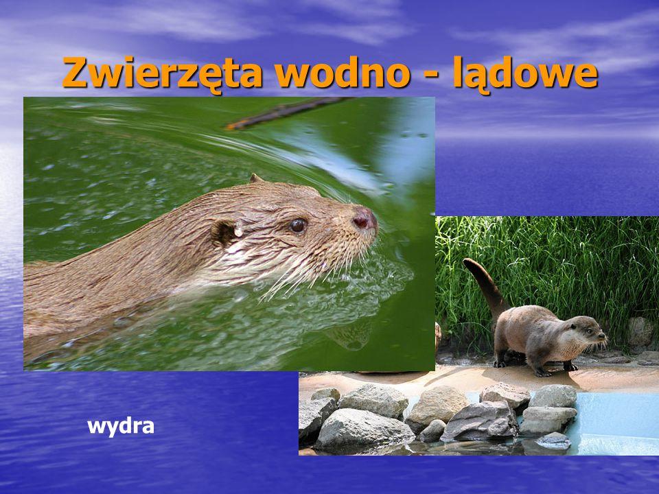 Zwierzęta wodno - lądowe
