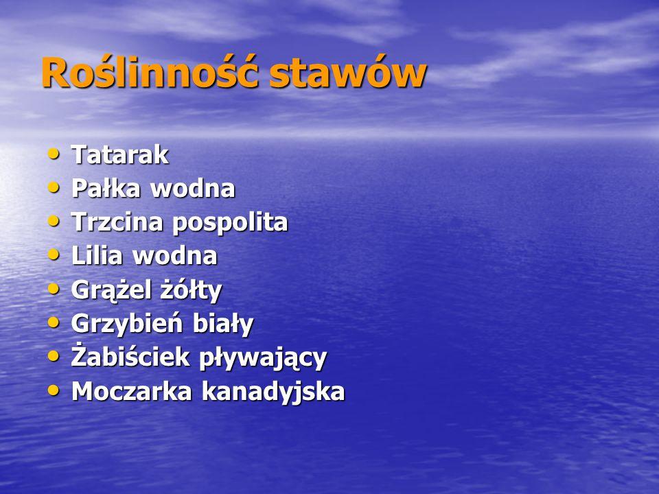 Roślinność stawów Tatarak Pałka wodna Trzcina pospolita Lilia wodna