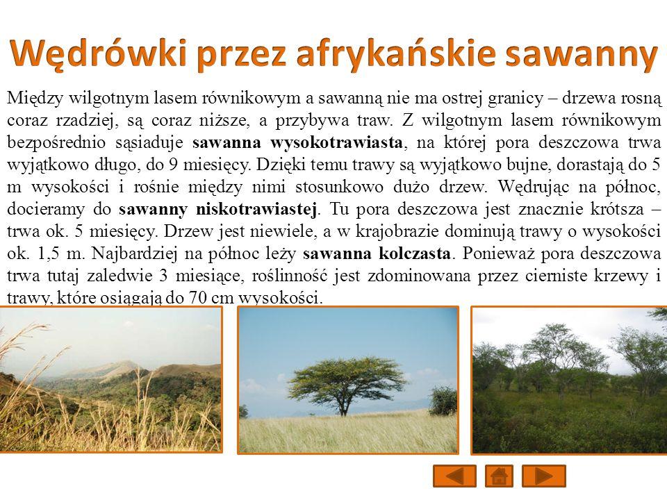 Wędrówki przez afrykańskie sawanny