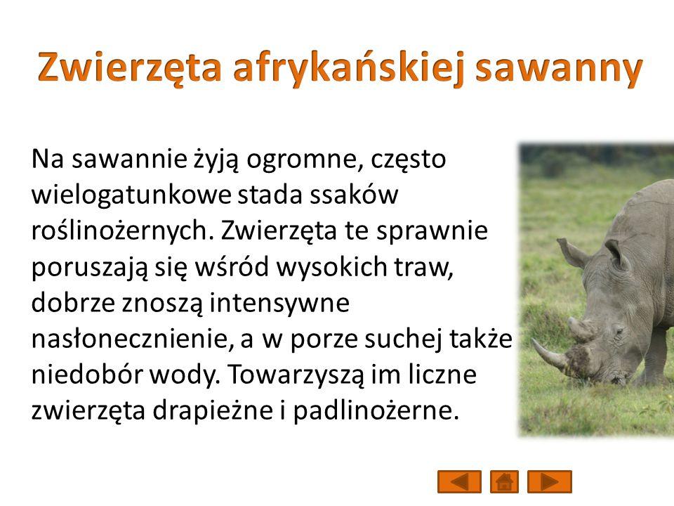 Zwierzęta afrykańskiej sawanny