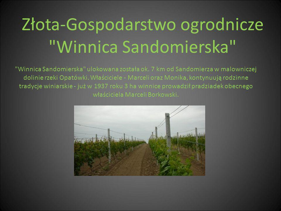 Złota-Gospodarstwo ogrodnicze Winnica Sandomierska
