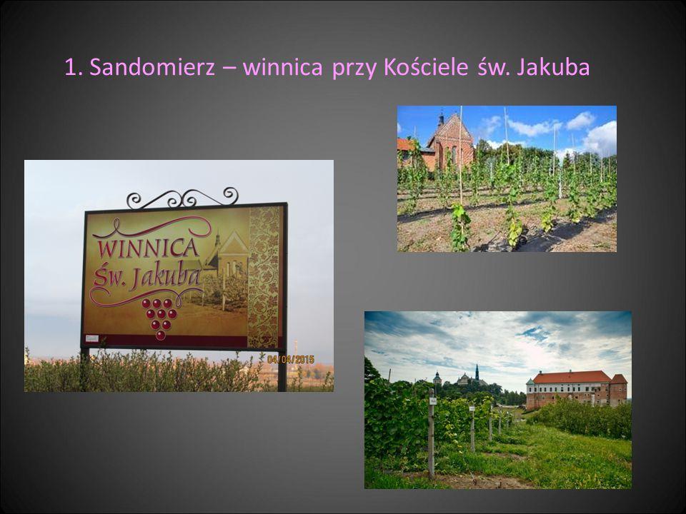 Sandomierz – winnica przy Kościele św. Jakuba