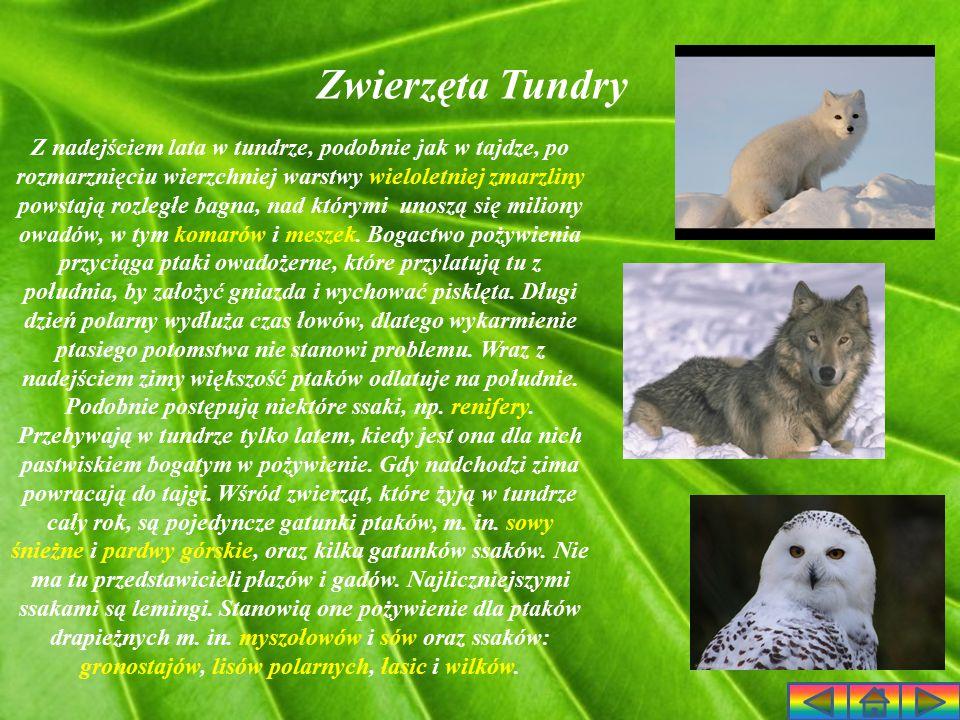Zwierzęta Tundry