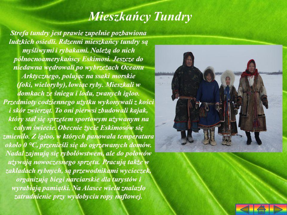 Mieszkańcy Tundry