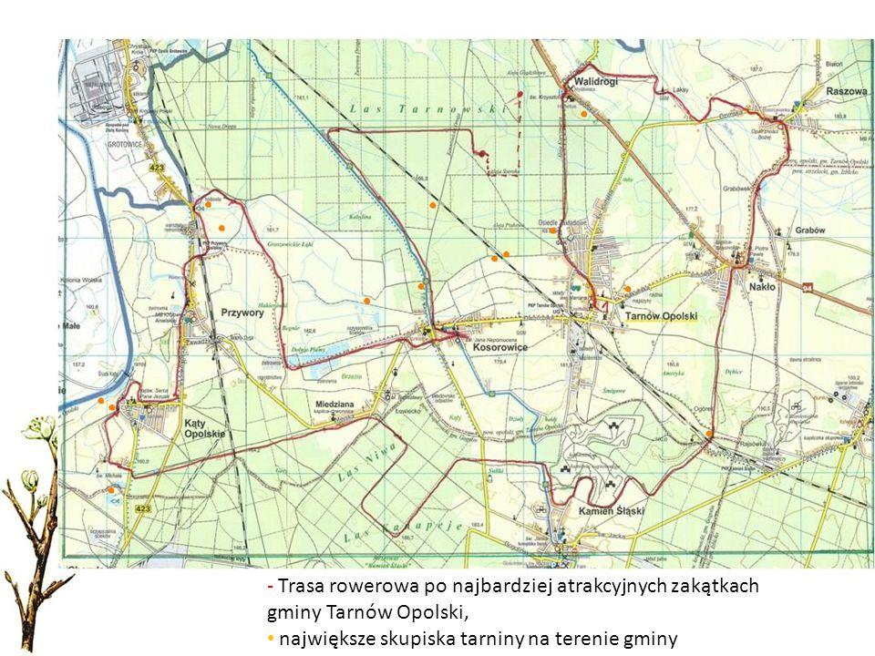 Trasa rowerowa po najbardziej atrakcyjnych zakątkach gminy Tarnów Opolski,