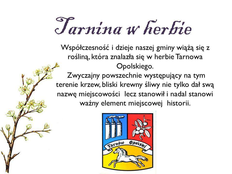 Tarnina w herbie Współczesność i dzieje naszej gminy wiążą się z rośliną, która znalazła się w herbie Tarnowa Opolskiego.