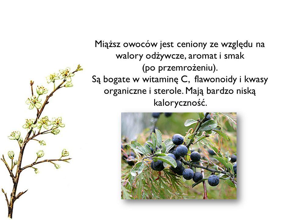 Miąższ owoców jest ceniony ze względu na walory odżywcze, aromat i smak