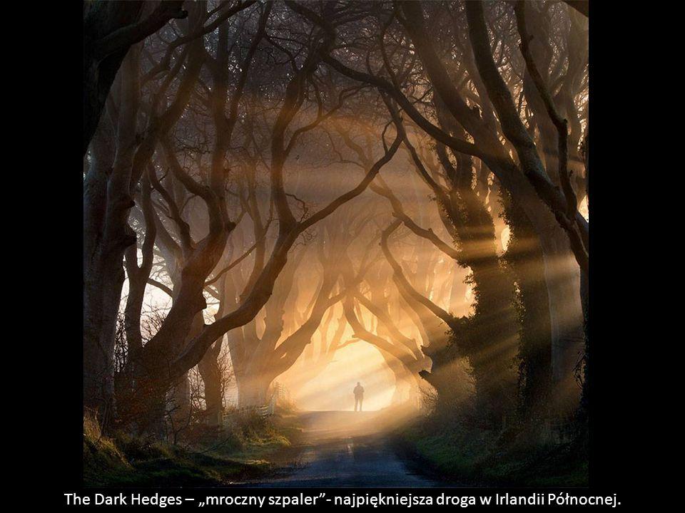 """The Dark Hedges – """"mroczny szpaler - najpiękniejsza droga w Irlandii Północnej."""