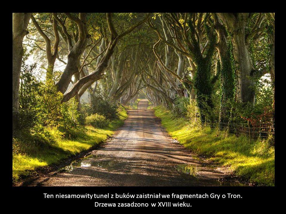 Ten niesamowity tunel z buków zaistniał we fragmentach Gry o Tron.