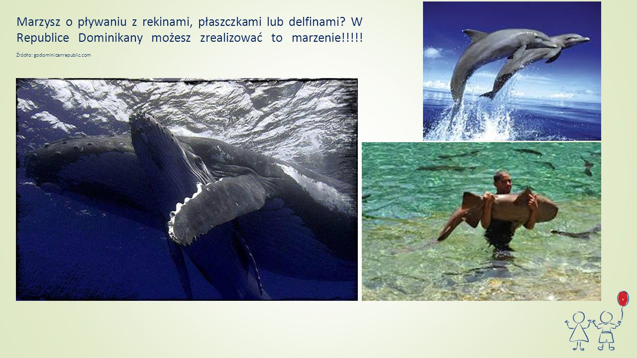 Marzysz o pływaniu z rekinami, płaszczkami lub delfinami