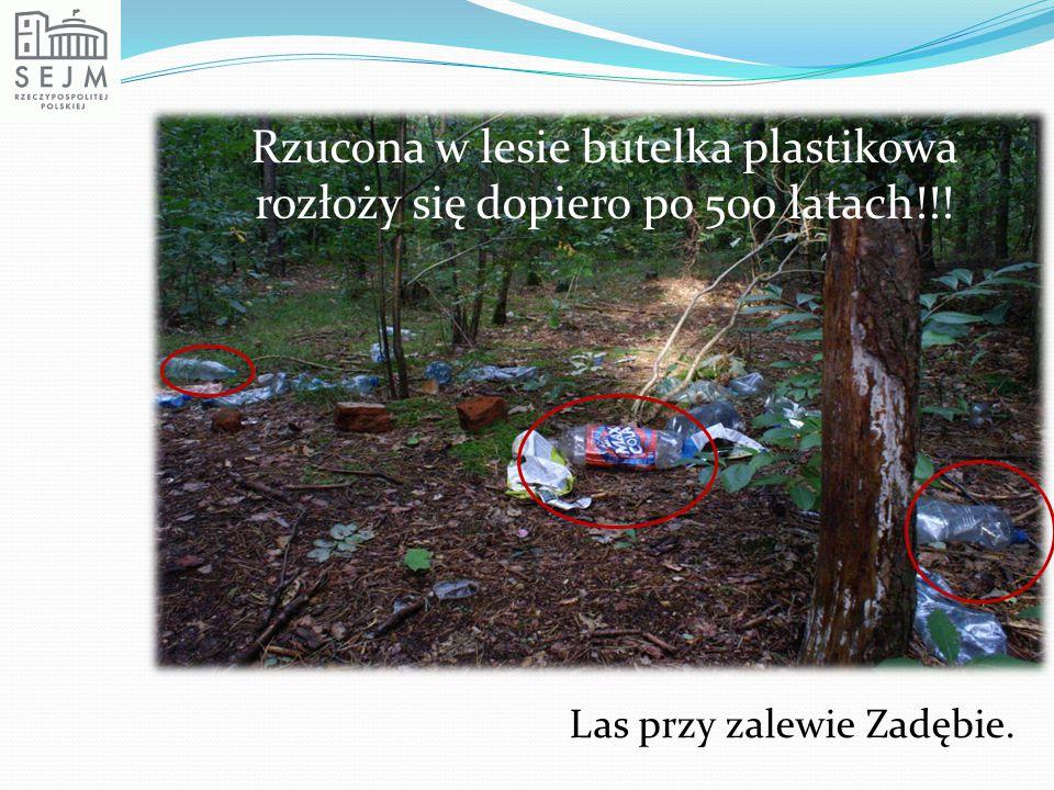 Rzucona w lesie butelka plastikowa rozłoży się dopiero po 500 latach!!!