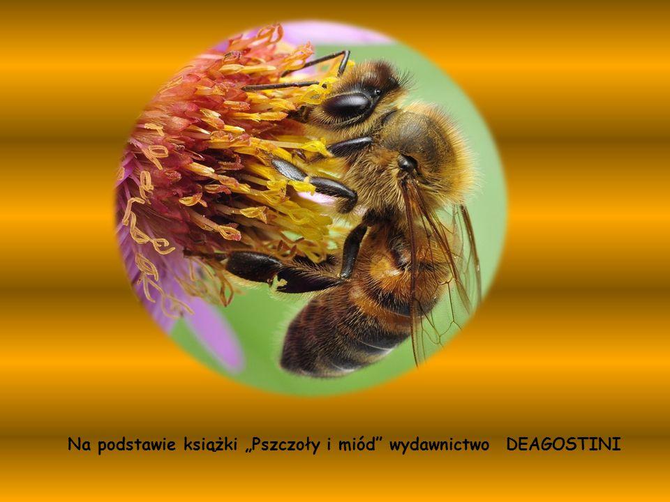 """Na podstawie książki """"Pszczoły i miód wydawnictwo DEAGOSTINI"""