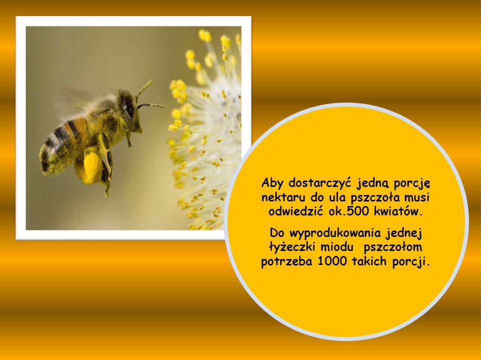 Aby dostarczyć jedną porcję nektaru do ula pszczoła musi odwiedzić ok