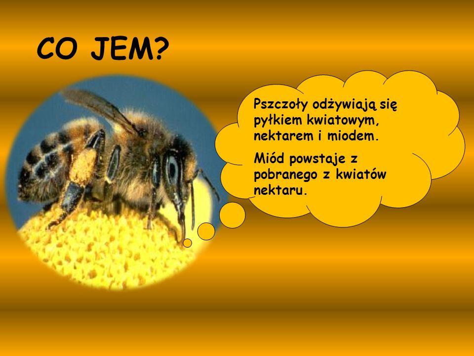 CO JEM Pszczoły odżywiają się pyłkiem kwiatowym, nektarem i miodem.
