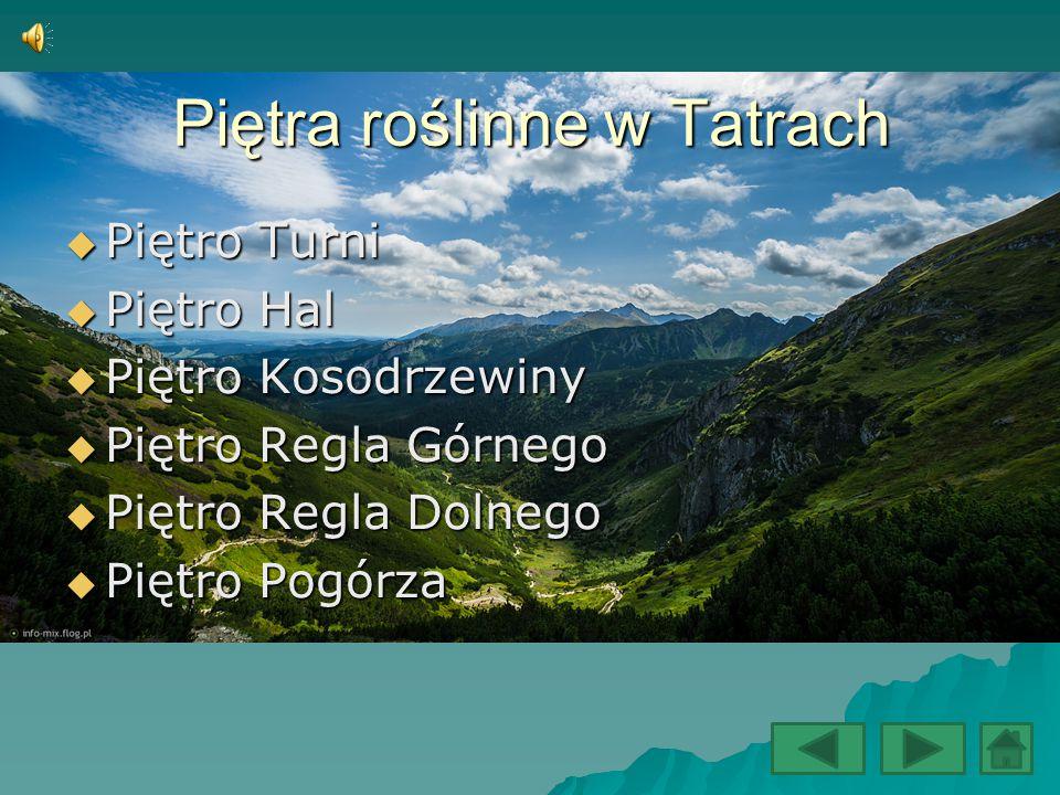 Piętra roślinne w Tatrach
