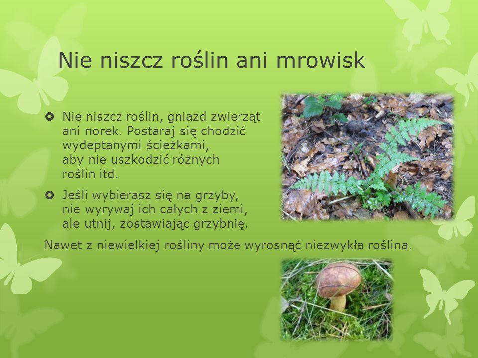 Nie niszcz roślin ani mrowisk