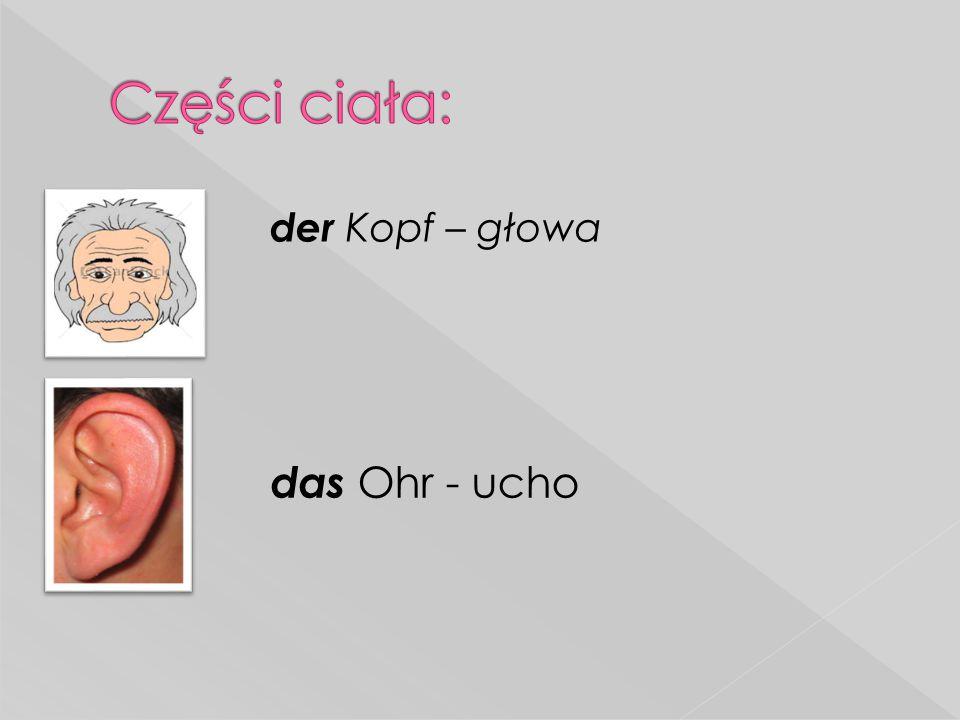 Części ciała: der Kopf – głowa das Ohr - ucho