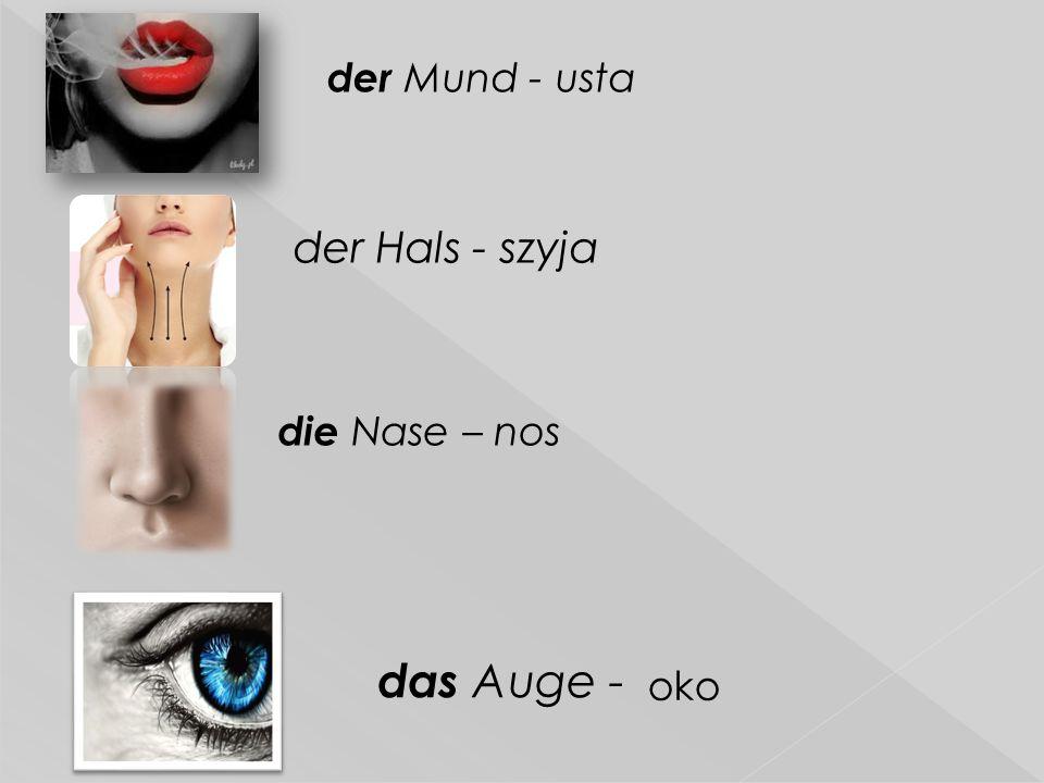 der Mund - usta der Hals - szyja die Nase – nos das Auge - oko