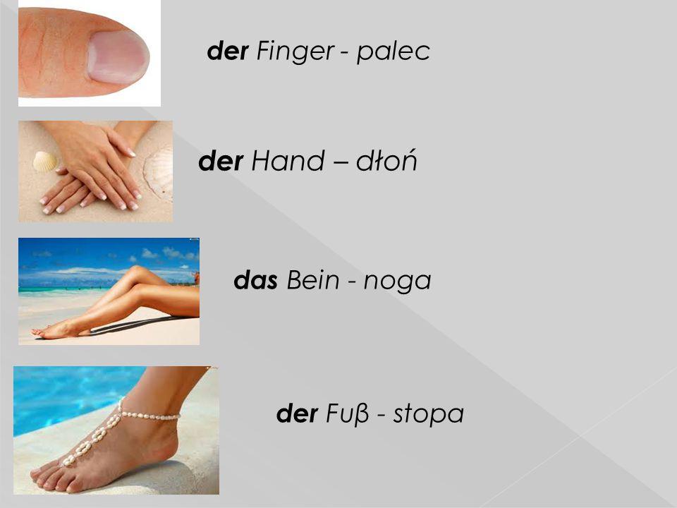der Finger - palec der Hand – dłoń das Bein - noga der Fuβ - stopa