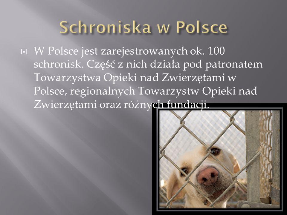 Schroniska w Polsce