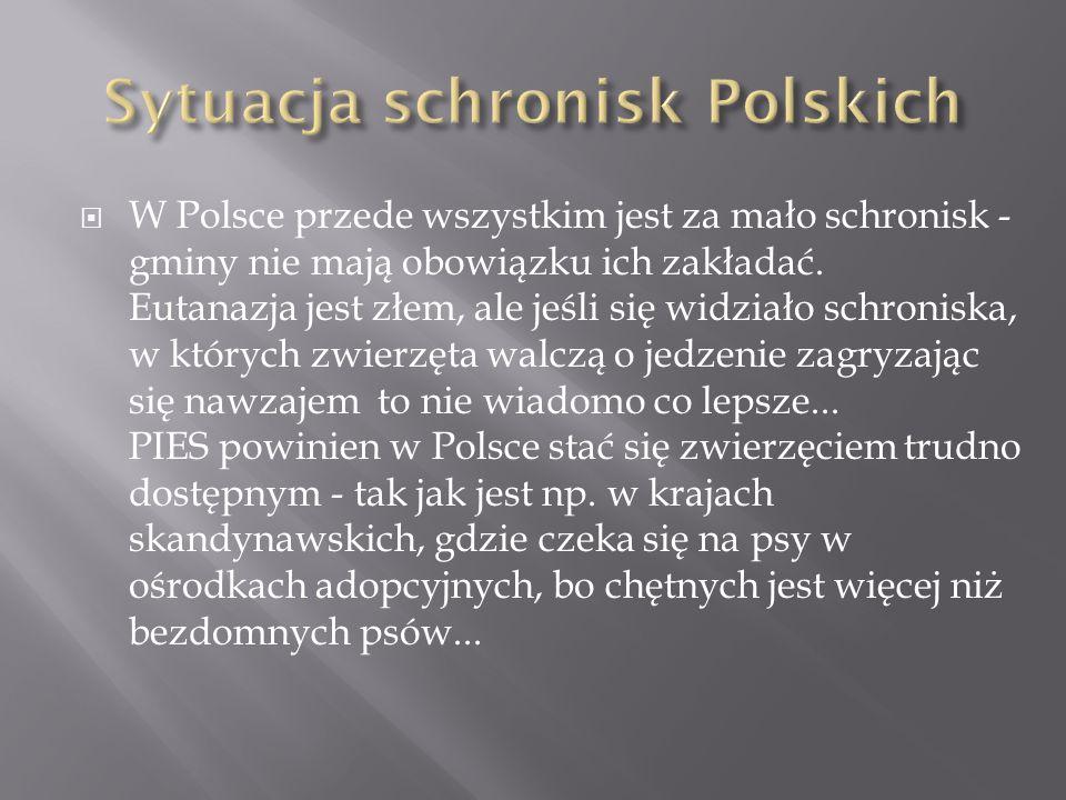 Sytuacja schronisk Polskich