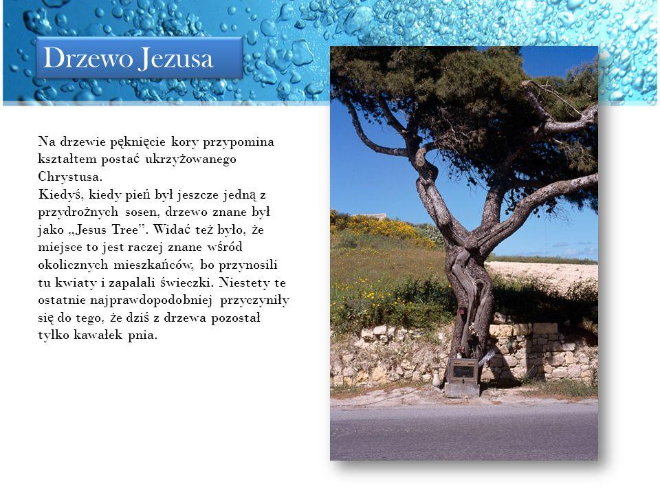 Drzewo Jezusa Na drzewie pęknięcie kory przypomina kształtem postać ukrzyżowanego Chrystusa.