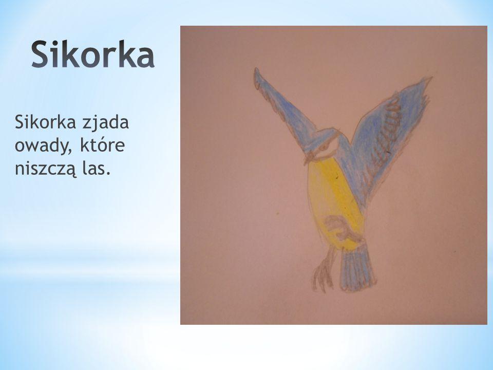 Sikorka Sikorka zjada owady, które niszczą las.