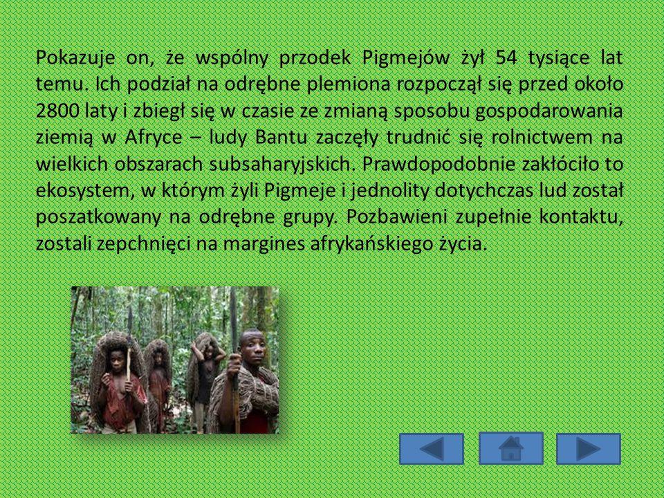 Pokazuje on, że wspólny przodek Pigmejów żył 54 tysiące lat temu