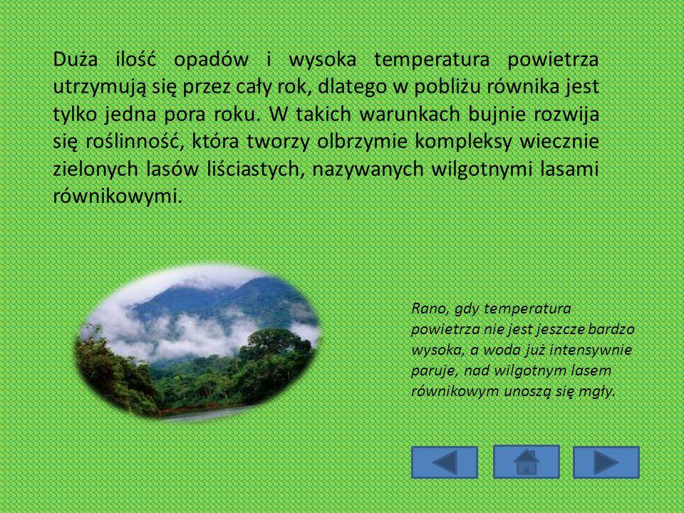 Duża ilość opadów i wysoka temperatura powietrza utrzymują się przez cały rok, dlatego w pobliżu równika jest tylko jedna pora roku. W takich warunkach bujnie rozwija się roślinność, która tworzy olbrzymie kompleksy wiecznie zielonych lasów liściastych, nazywanych wilgotnymi lasami równikowymi.