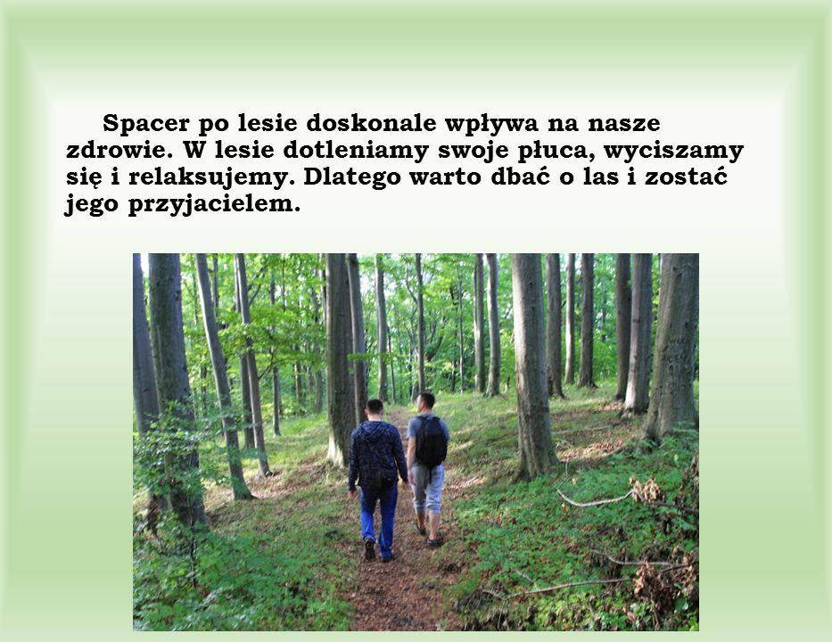 Spacer po lesie doskonale wpływa na nasze zdrowie