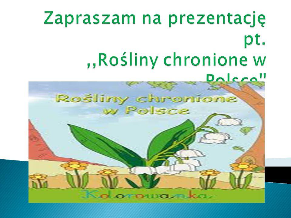 Zapraszam na prezentację pt. ,,Rośliny chronione w Polsce