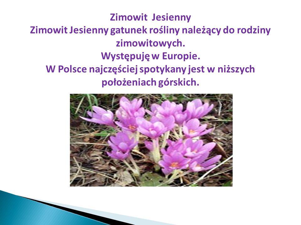 Zimowit Jesienny gatunek rośliny należący do rodziny zimowitowych.