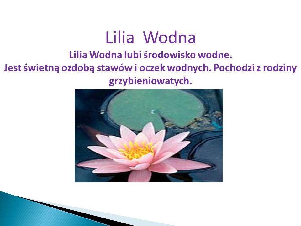 Lilia Wodna lubi środowisko wodne.