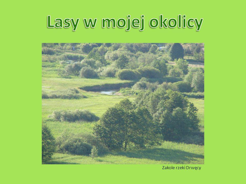 Lasy w mojej okolicy Zakole rzeki Drwęcy